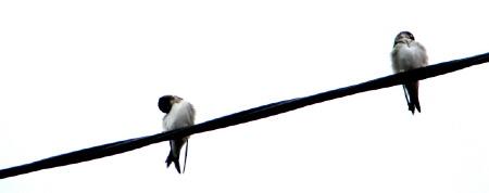 trudne_rozstania_ptaki
